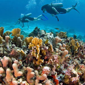 arrecifes de coral en la riviera maya
