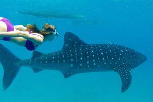 tiburones en islas maldivas
