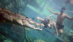 nadar con cocodrilos